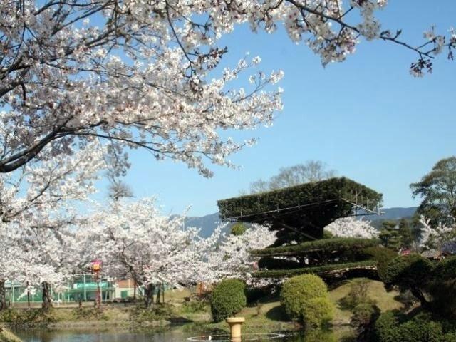 小城公園の桜|花見特集