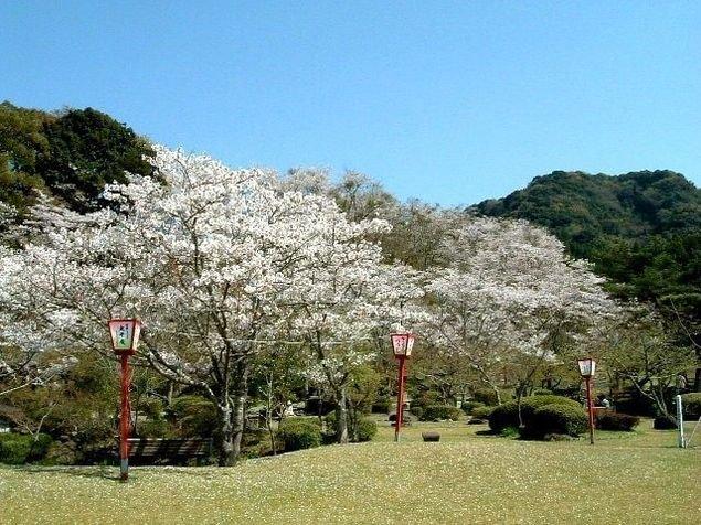 西渓公園の桜(佐賀県)|ウォーカープラス