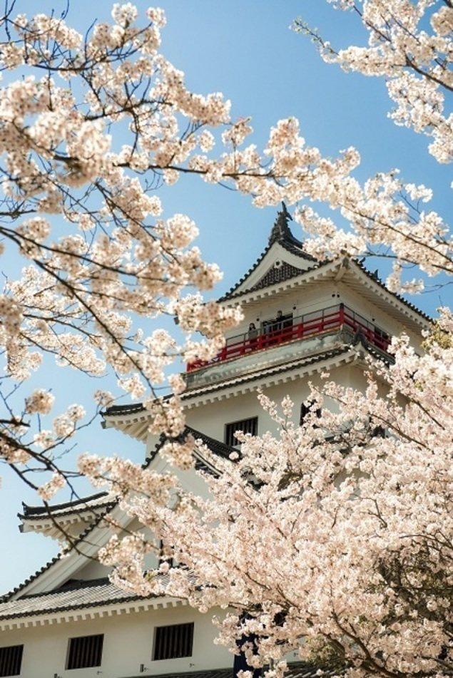 唐津城(舞鶴公園)の桜(佐賀県)|ウォーカープラス