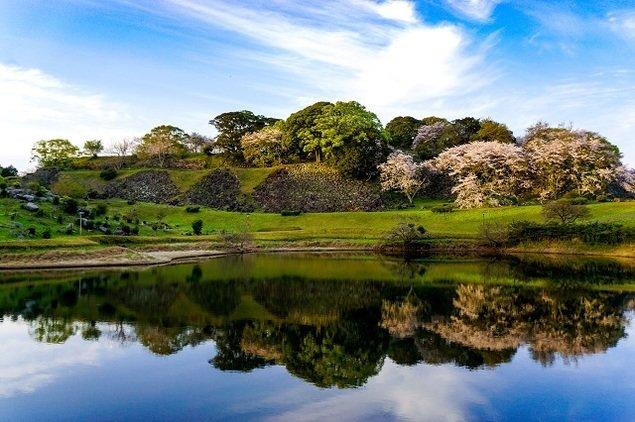 名護屋城跡の桜(佐賀県)|ウォーカープラス