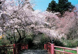 亀岡八幡宮|仙台市 緑の名所 100選