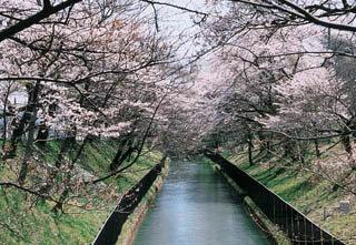 三居沢|仙台市 緑の名所 100選