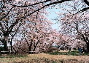 高森山公園|仙台市 緑の名所 100選
