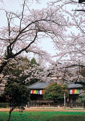 薬師堂周辺|仙台市 緑の名所 100選