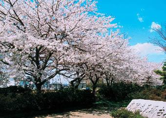 遠見塚小学校周辺|仙台市 緑の名所 100選
