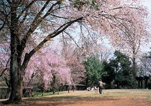 野草園|仙台市 緑の名所 100選
