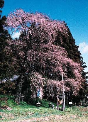 貴船神社|仙台市 緑の名所 100選