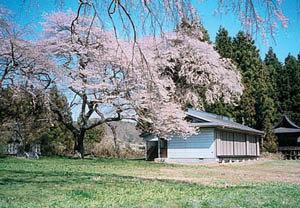 白石城跡|仙台市 緑の名所 100選