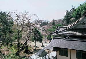 洞雲寺|仙台市 緑の名所 100選