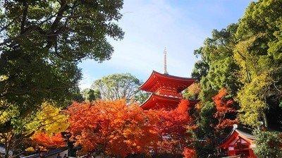大本山 須磨寺の紅葉情報 |ウォーカープラスの紅葉名所2019