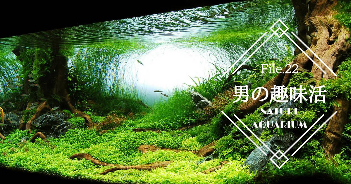 水草の芸術!ネイチャーアクアリウムで水槽に自然を再現しよう【男の趣味活】