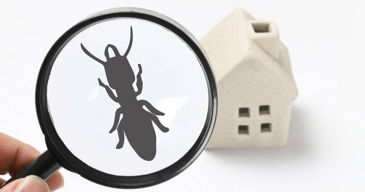 【防虫対策】もう夏の害虫に悩まされない!害虫別の駆除対策&オススメ退治アイテム