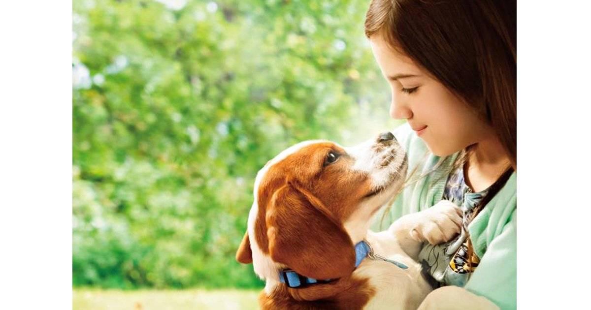 『僕のワンダフル・ジャーニー』 | 強い愛情で結ばれた忠犬と飼い主一家の絆は永遠に