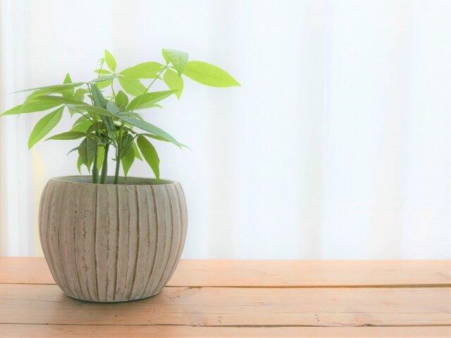 観葉植物,育てるコツ