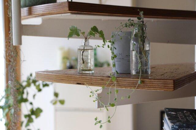 観葉植物,水栽培