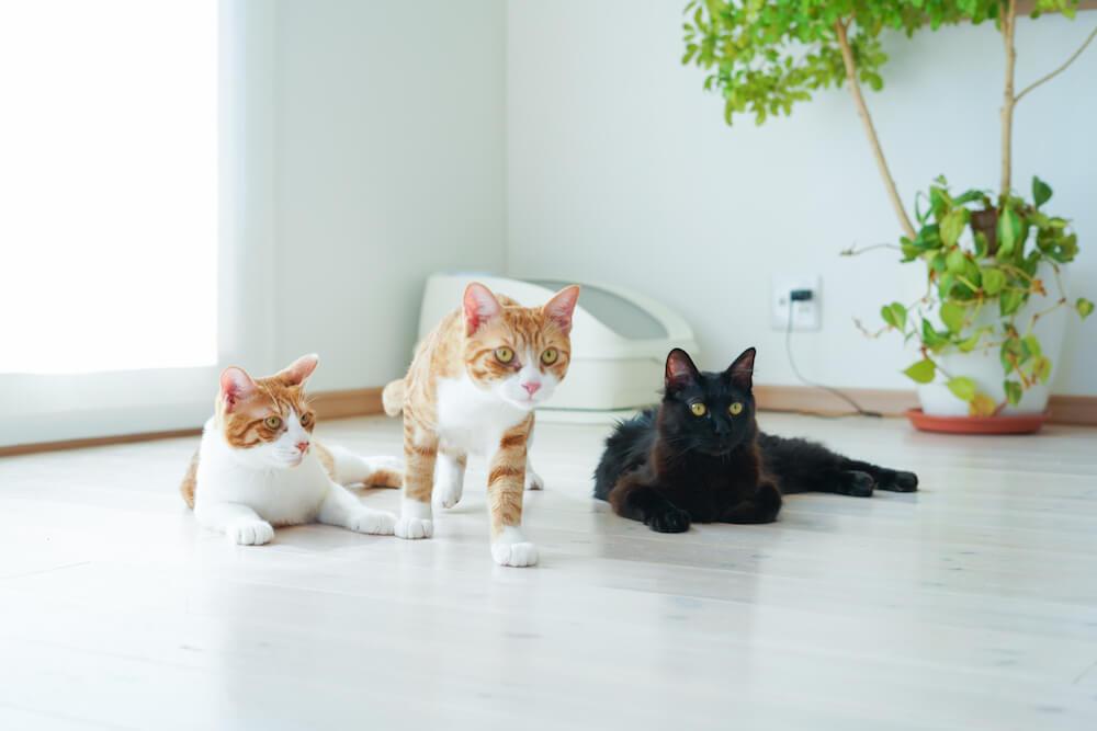 愛猫家から熱烈な支持を集める「toletta(トレッタ)」