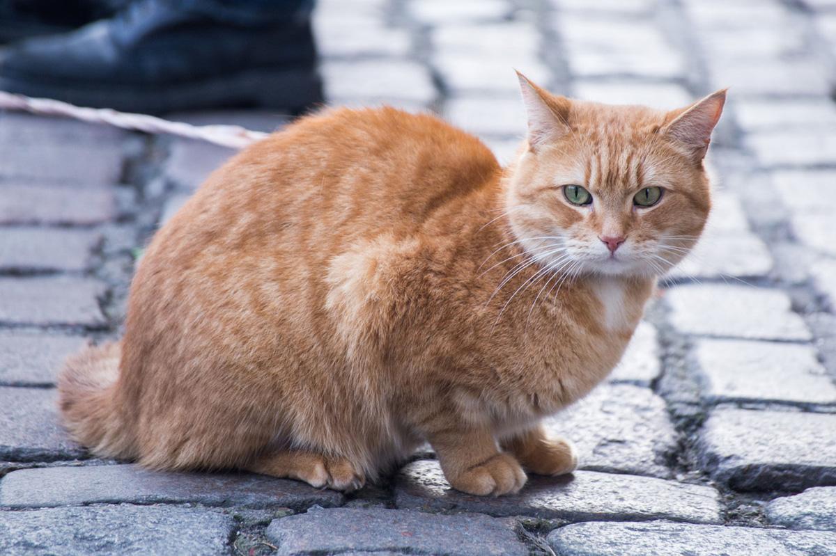 『ボブという名の猫 幸せのハイタッチ,実話,映画,家men