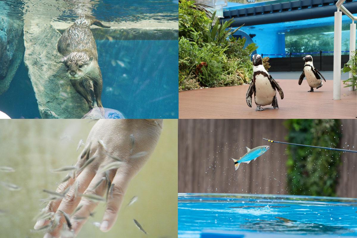 サンシャイン水族館,生き物たちのミニ運動会,家men,イベント,家族,親子,子ども,9月