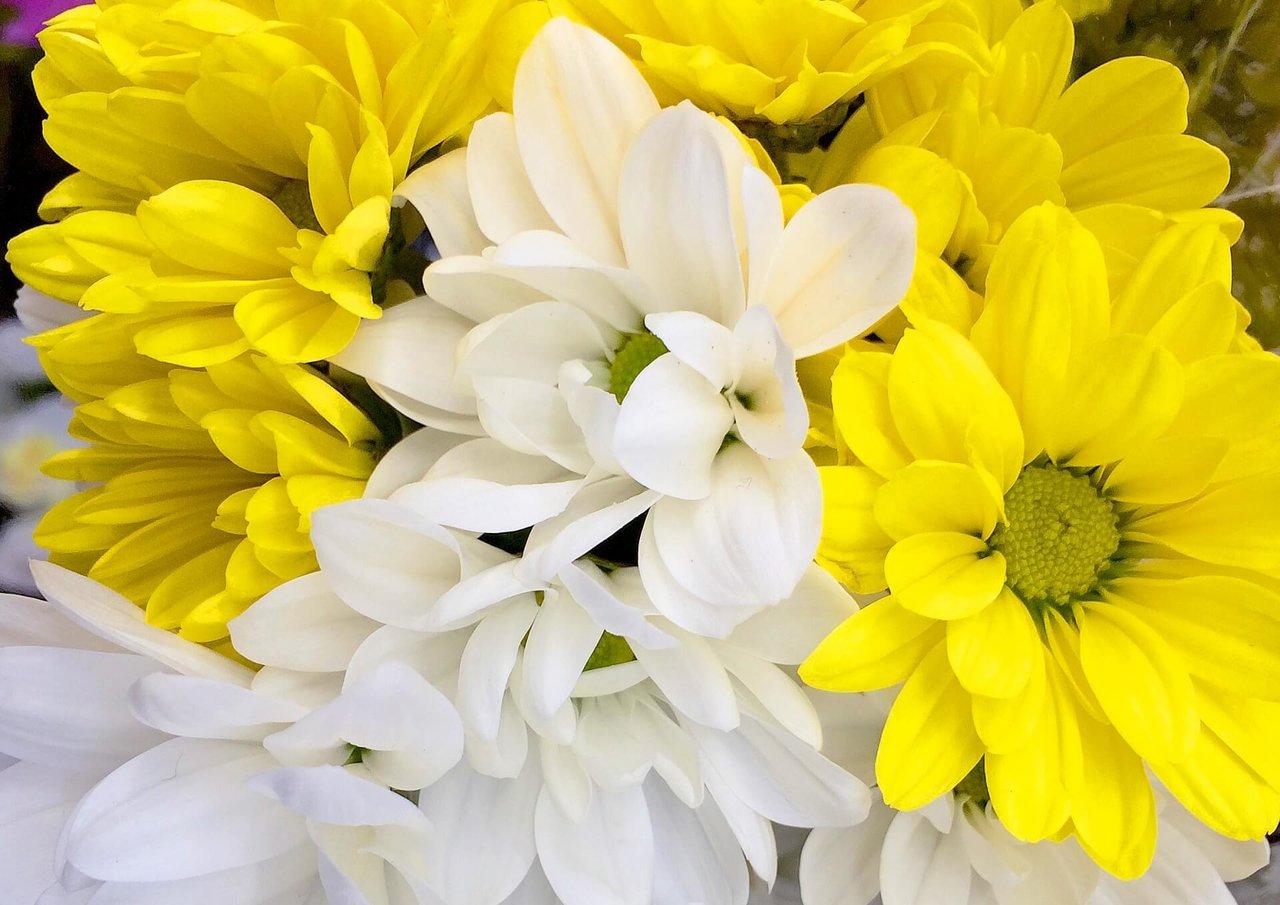 供花の手配の仕方とは?知っておきたい供花のマナー・相場をご紹介