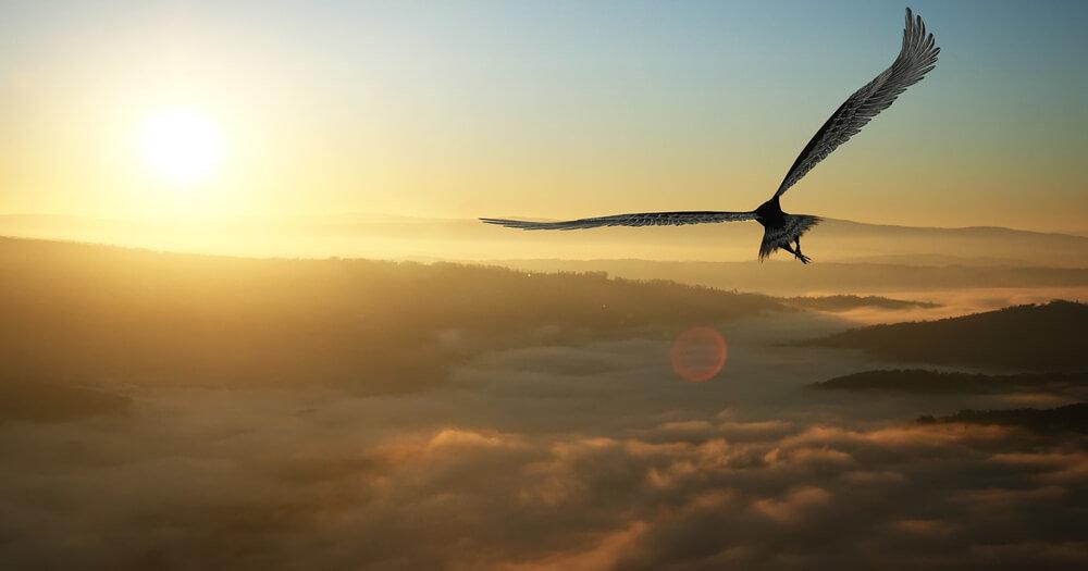 鳥葬について詳しく解説。見学の可否や注意点は?