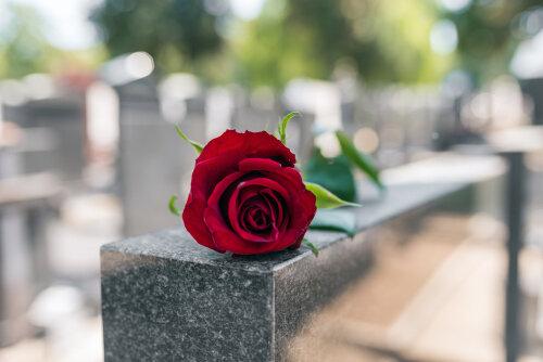 一般葬と家族葬はどんなところが違う?特徴・費用・普及率をまとめて紹介