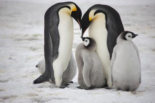 家族愛の強い動物ペンギンを学ぶ。伴侶と添い遂げる秘訣