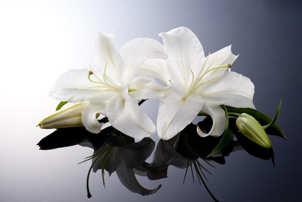 別れ花とは棺に花を手向ける儀式。手順や花の種類を解説