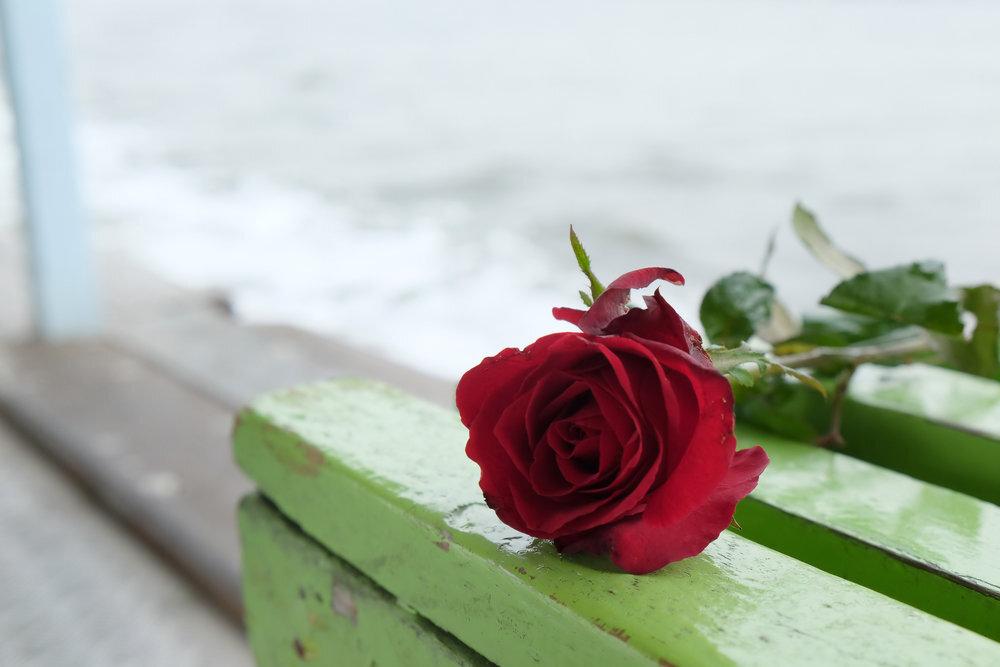 ベンチに置かれたバラ