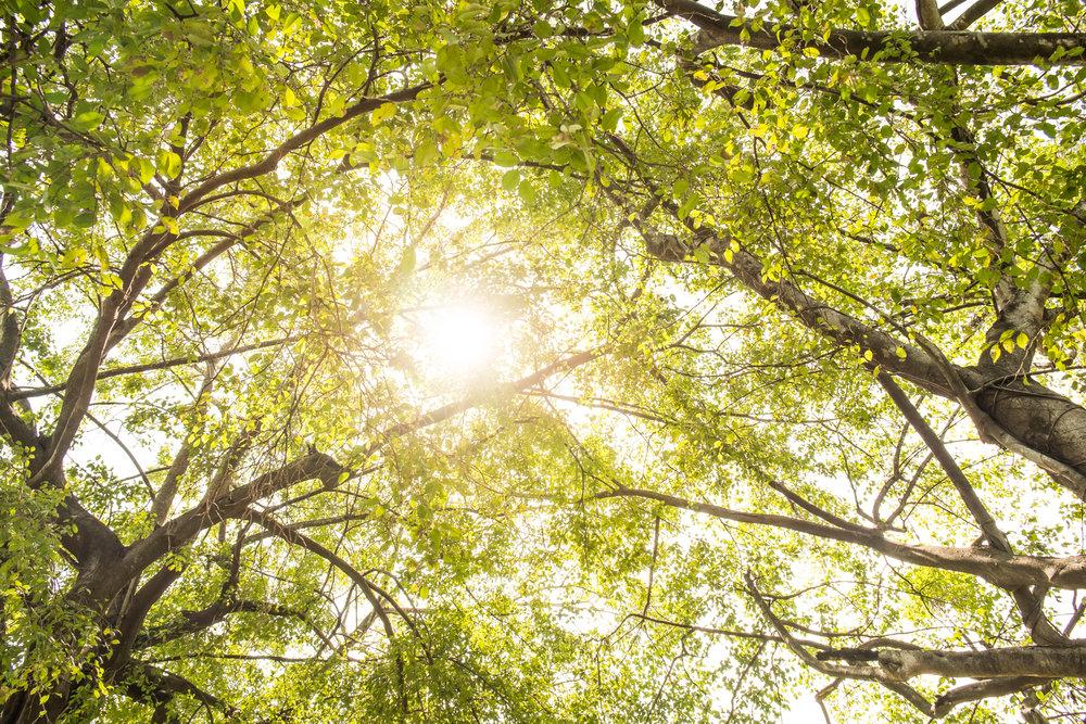 木漏れ日が差し込む木々