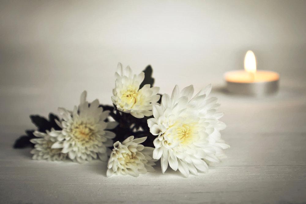 お葬式に使う菊の花