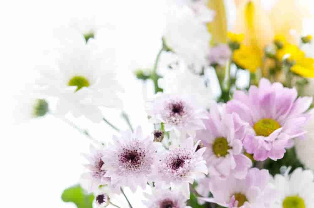 おそなえとして定番の花