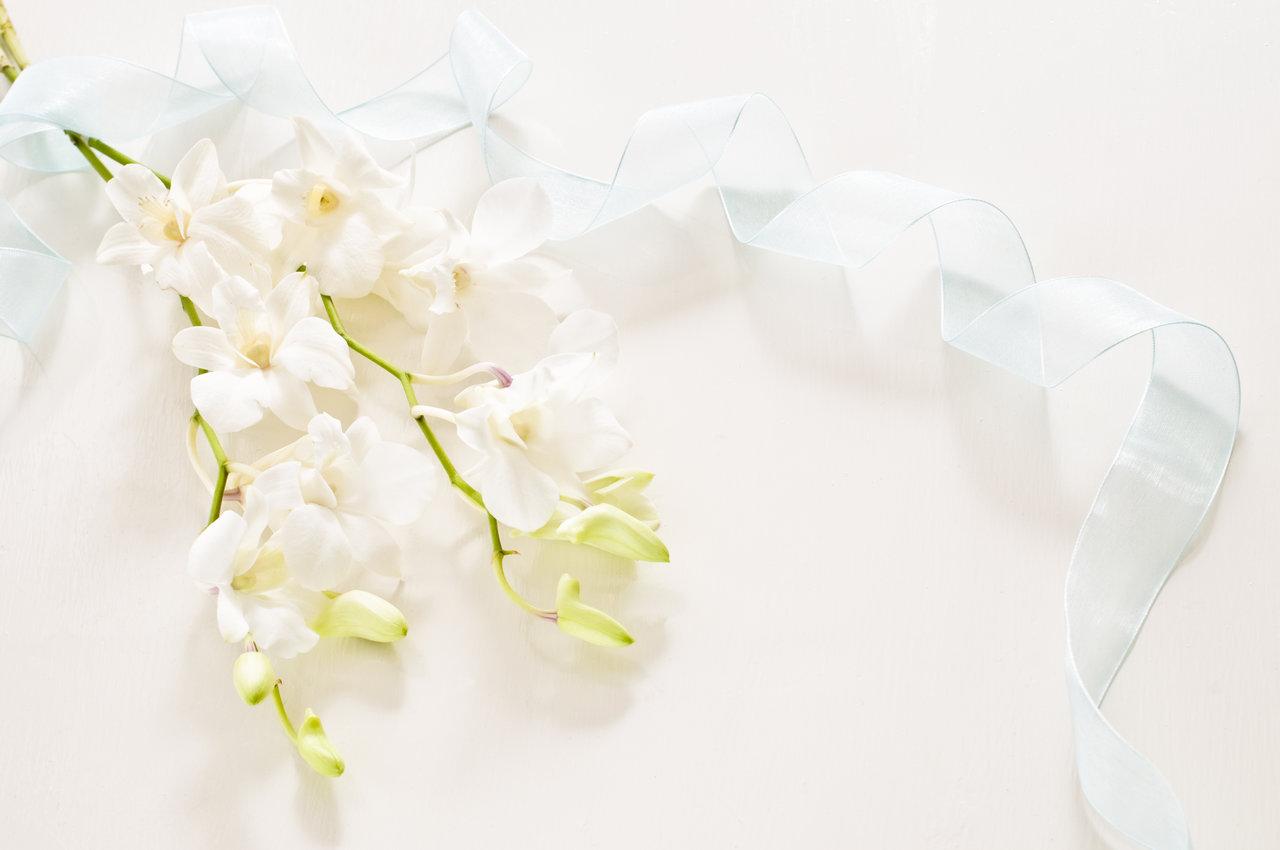 リボンと白い花