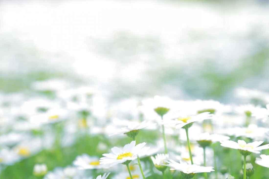 きれいに咲いている花