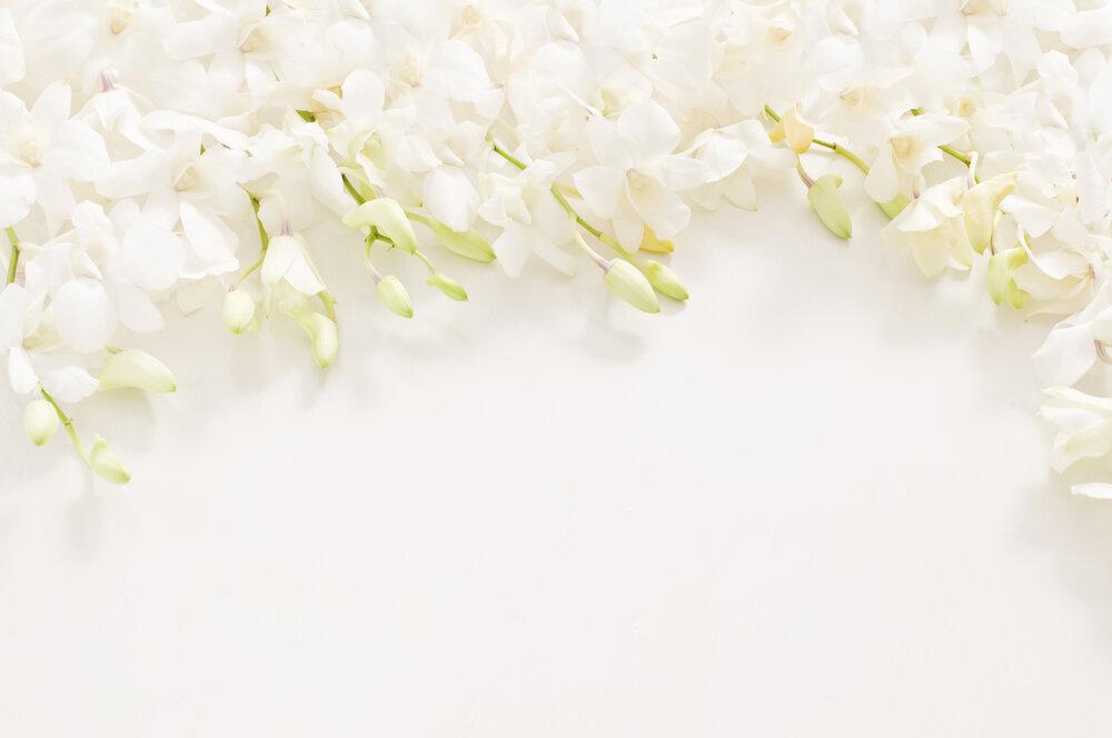 たくさんの白い花