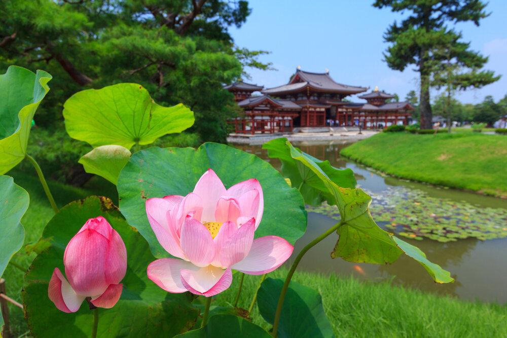 綺麗に咲く花