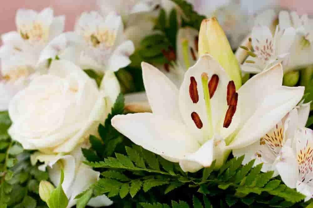 花束にされた白い花