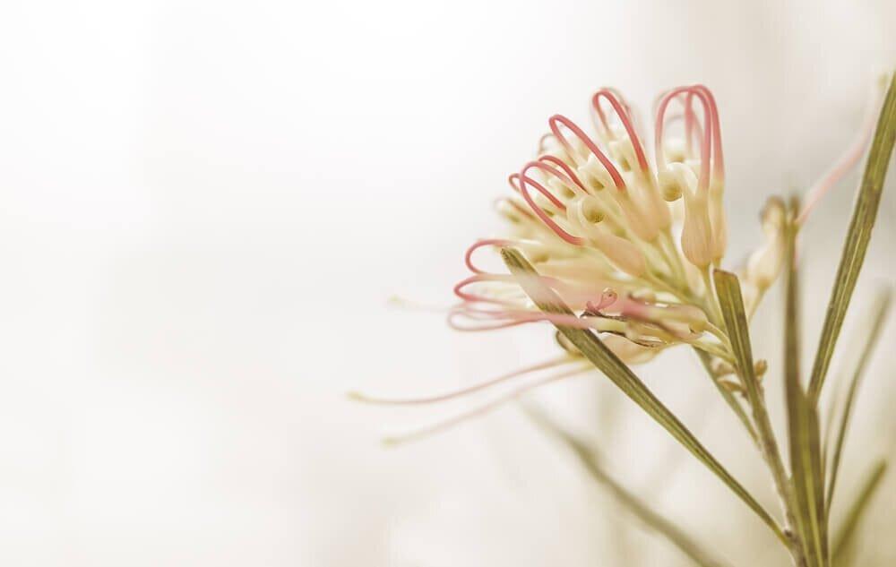 儚い雰囲気を醸し出す花