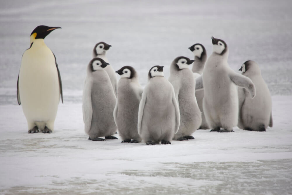並ぶペンギン