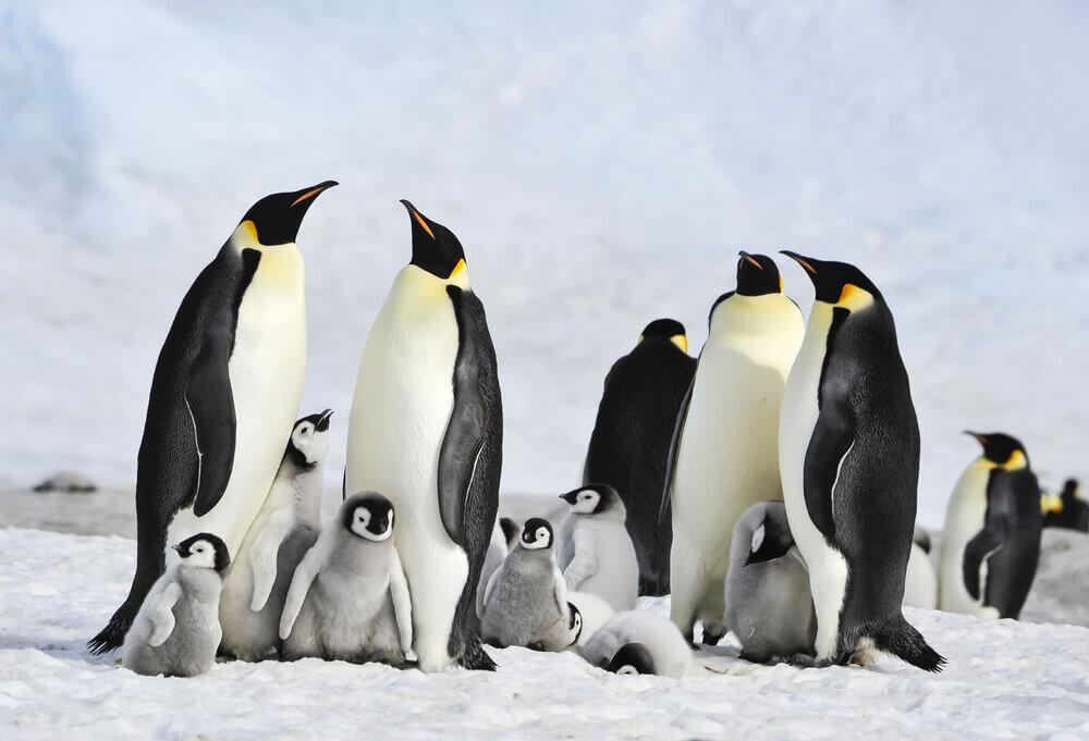 集合するペンギン