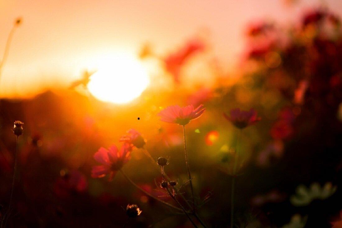 秋の夕日とコスモス