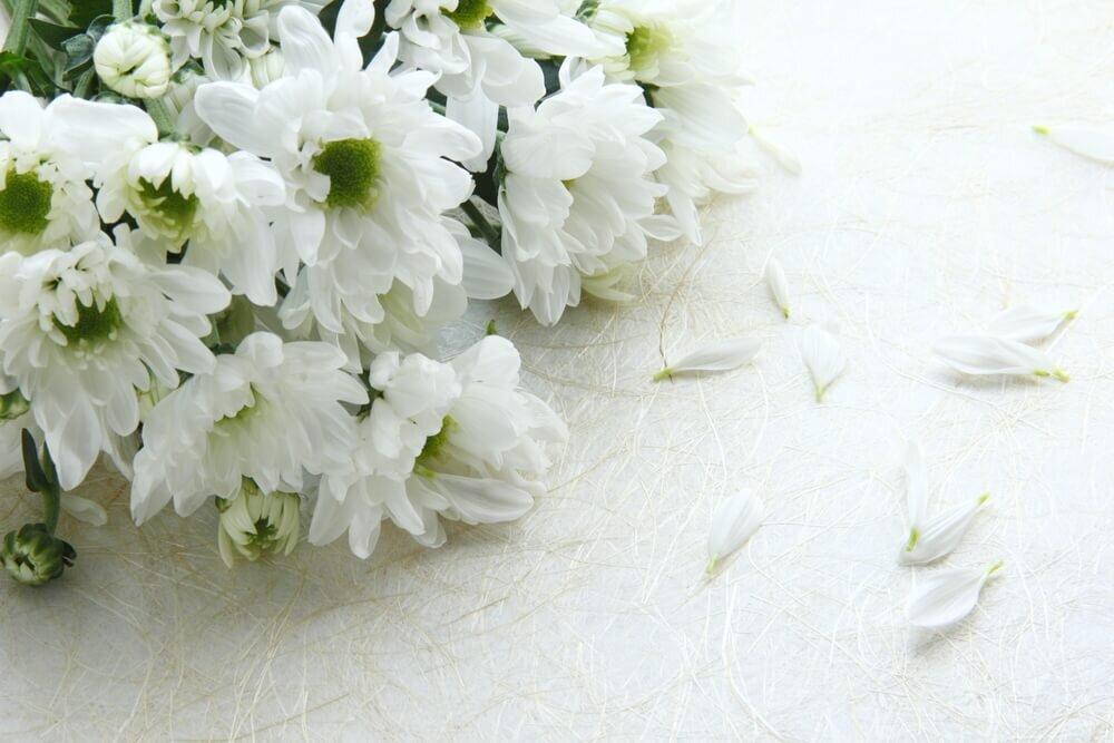 花束になった白い菊