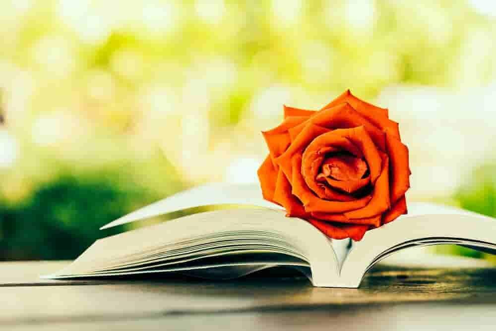 花が置かれた本