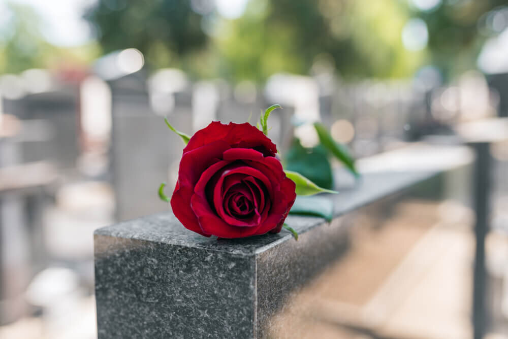 お墓の上に置かれた一輪の花