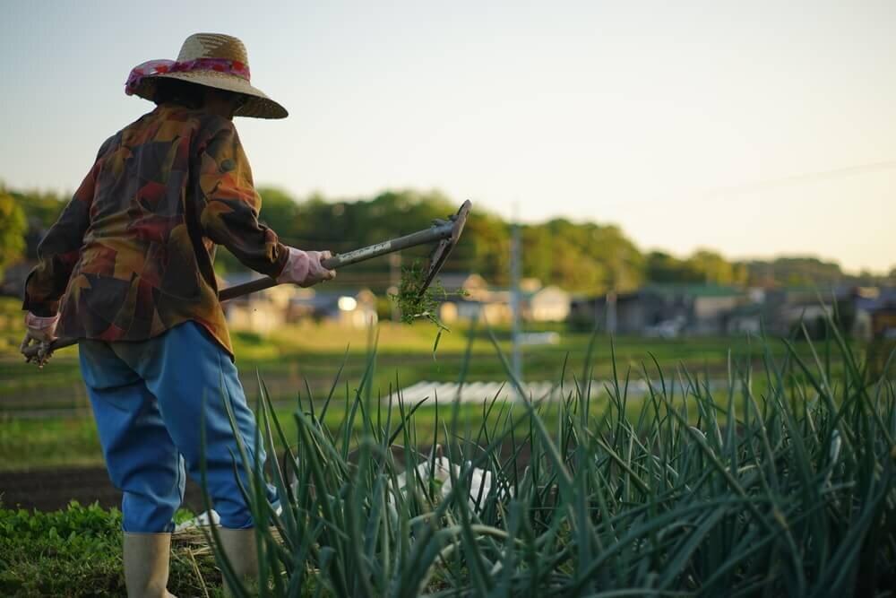 農作業をする人