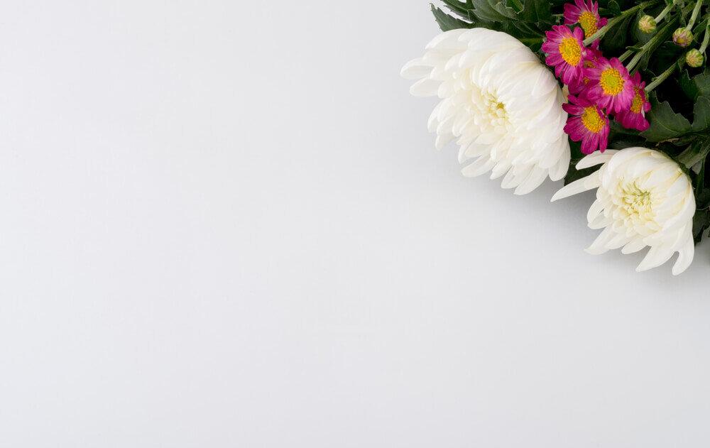 白色とピンク色の菊