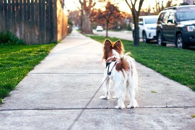 はじめて「犬」を飼うためにオススメのアイテムと飼育の心構え