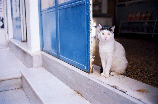 初めて猫を飼う方へ!猫と仲良く楽しく暮らすために!