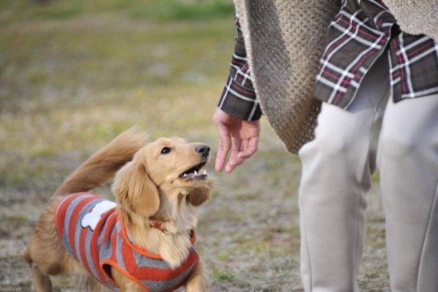 【はじめての愛犬飼育スペシャリスト】大人が始める、愛犬の飼育・しつけなどのスペシャリストへの道へ挑戦!