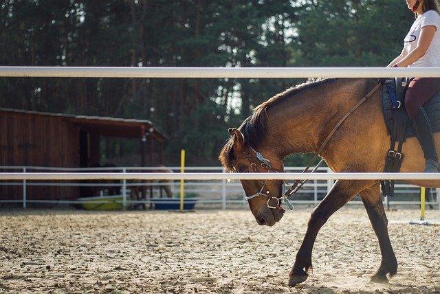 憧れの乗馬を始めたい!知っておきたい乗馬の魅力と始め方について
