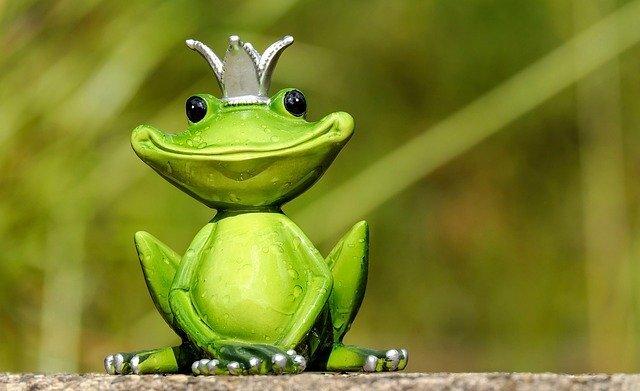 はじめてのカエルの飼育入門!飼いやすい種類や用意しておくべきものは?